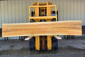 Silk Tree Wood Live Edge Wood Slab - J180603 - 104x16x3 - Side 1