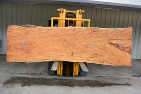 Chime Tree  Live Edge Slab - PJ20928 - 144x41x3 - Side 1