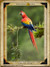 Sample Page: Scarlet Macaw, Costa Rica