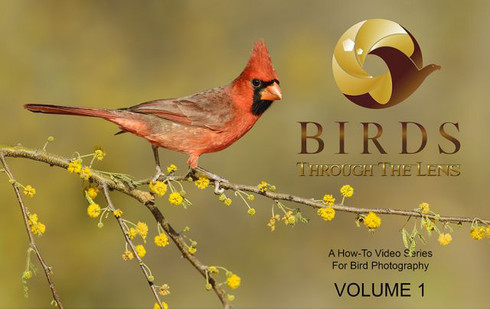 Birds Through the Lens - How-To Video Series for Bird Photography, Volume 1