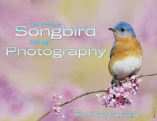 "Alan Murphy's ""Guide to Songbird Set-up Photography"" - eBook"