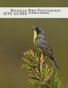 Michigan's Best Places for Bird Photography by Matthew Studebaker