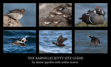 Barnegat Jetty Site Guide by Denise Ippolito with Arthur Morris eBook