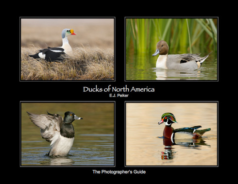 Ducks of North America - The Photographer's Guide by E.J. Peiker