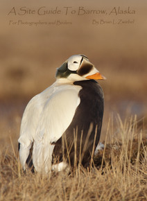 Site Guide to Barrow, AK for Photographers & Birders by Brian Zwiebel