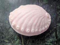 Abalone Seashell Soap