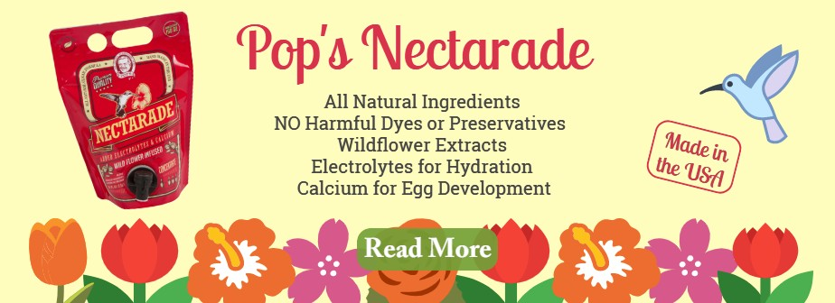 What makes Nectarade so good?