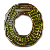 Geode-Coin Yellow\Greenish Topaz - Gold