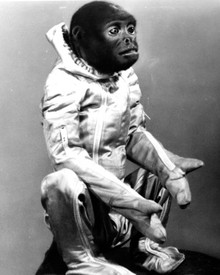 Mona, the Woolly Monkey in Robinson Crusoe on Mars Poster and Photo