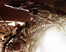 The Alien in Aliens Poster and Photo