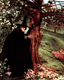 Margaret Hamilton in The Wizard of Oz Poster and Photo