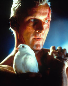 Rutger Hauer in Blade Runner Poster and Photo