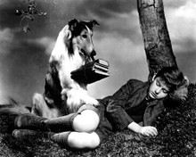 Roddy McDowall & Lassie in Lassie Come Home Poster and Photo