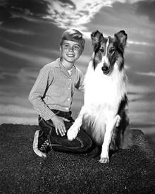Jon Provost & Lassie in Lassie (1954) Poster and Photo