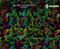 Butterfly Explosion Colorful Girly Woman Hydrographics Film Pattern Big Brain Graphics Mint Base