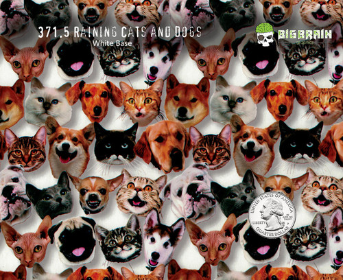Raining Cats and Dogs Kittens Kitties Puppies Dogs Faces Hydrographics Film Pattern Big Brain Graphics Trusted USA Seller White Background Quarter Reference