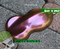 Devil's Advocate Mega Shift Intense Glitter Chameleon Paint High Quality Big Brain Coatings Graphics Extreme Shift Big Brain Graphics Side Top