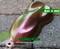 Pandora's Box Mega Intense Colorshift Chameleon Paint Big Brain Coatings Graphics Mega Intense Bass Boat Flake Big Brain Graphics Top