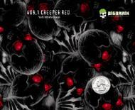 Creeper Red Creepy Skull Skulls Graveyard Motorcycle Hydrographics Dip Pattern Big Brain Graphics Yeti White Base Quarter Reference