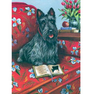 Scottie Note Cards Lil' Einstein