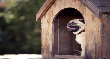dog-house-heater-16.jpg