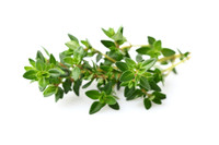 Thyme  (Thymus vulgaris ct. linalool) Essential Oil