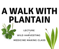 Plantain Herb Walk & Workshop