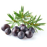 SALE -  Juniper Berry (Juniperus communis) Essential Oil - 50% Off