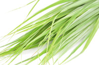 Citronella (Cymbopogon winterianus) - Insect Repellent