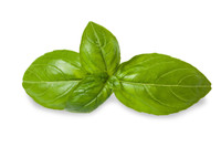 SALE - Basil (Ocimum basilicum ct. linalool) Essential Oil - 30% Off