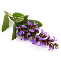 SALE - Clary Sage (Salvia sclarea) Essential Oil - 30% Off