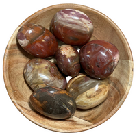 Petrified Wood - Palm Stone