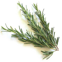 Rosemary (Rosmarinus officinalis ct. cineole) Essential Oil