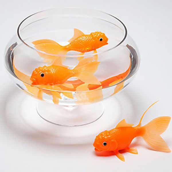 Koi Toy Light Up Goldfish | 2Shopper