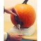 Pumpkin Tap   2Shopper.com