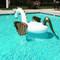 Inflatable Pegasus Float