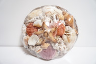 Assorted Sea Shell Pack Large (3.5 lbs.)