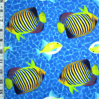 Tropical fish on blue water background