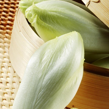 Botanical - Cichorium intybus