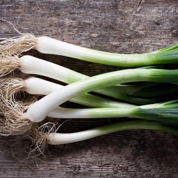 Botanical - Allium wakegi