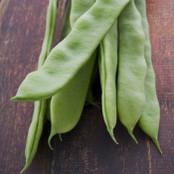 Botanical - Phaseolus coccineus
