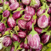 Aubergine Seeds - Pinstripe F1