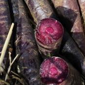 Carrot Seeds - Purple Sun F1