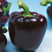 Sweet Pepper Seeds - Mavras F1