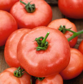 Tomato Seeds - Beefmaster F1