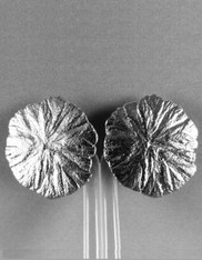 Stephen Dweck Intricate Leaf Pattern Sterling Silver Clip Earrings