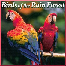 Birds of the Rain Forest CD