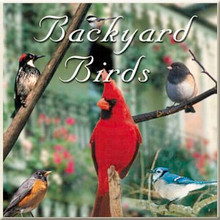 Backyard Birds CD