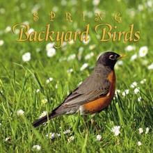 Spring Backyard Birds CD