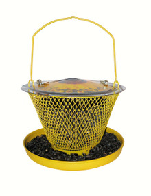 Designer Sunflower Single with Tray
